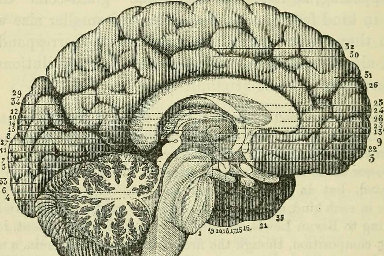 AI应从神经科学中借鉴想法和思路