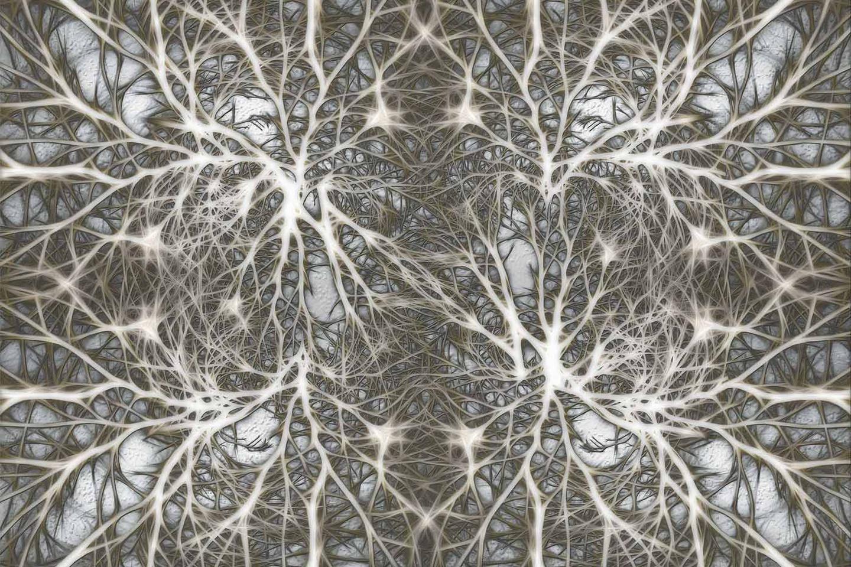 什么是神经网络架构搜索?